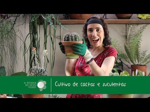 Nô Figueiredo Ensina Como Cultivar Cactos e Suculentas/Cacti & Succulents