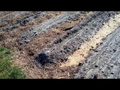 (211)Огород.Спаренный модуль и мой вариант аллейного земледелия.