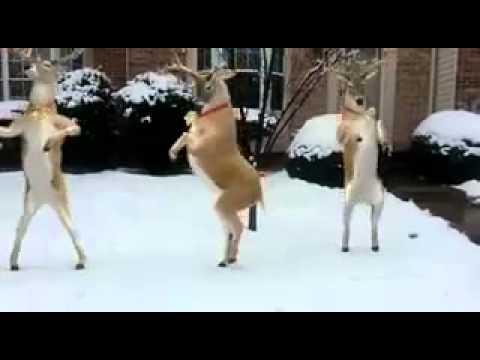 """Reindeer Dancing to """"Jingle Bells"""""""