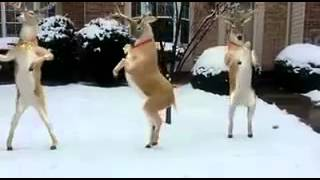 "Reindeer Dancing to ""Jingle Bells"""