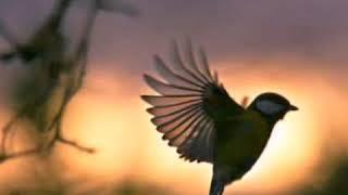 นกขมิ้น [คาราโอเกะ]