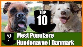top 10 mest populære hundenavne i danmark
