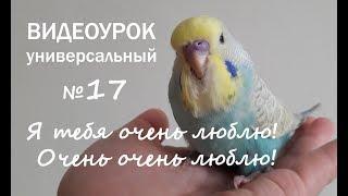 """🎧 Учим попугая говорить. Урок №17: """"Я тебя очень люблю! Очень очень люблю!"""""""