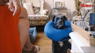 Qbleev inflatable dog collar