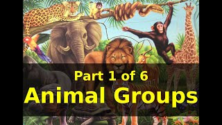Animals and the NAMES  of the ANIMAL GROUP |Part 1 of 6 Animal Groups