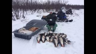 Охота на гусей 2017 на крайнем севере