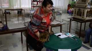 Международная выставка кошек 2012 г.Кременчуг