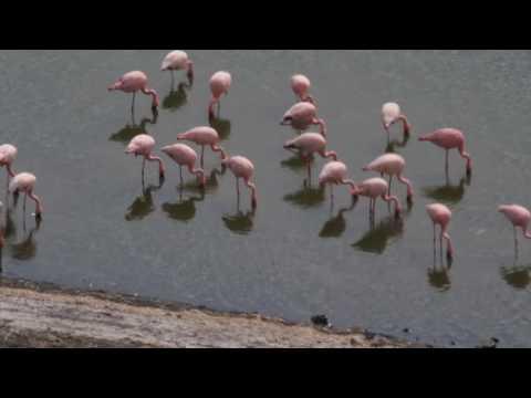 PB277318   Flamingos Chitu meer