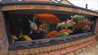 Koi Keeper Visited Kens Pond and Garden