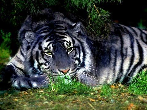 Nature area Most popular animals in India Chiriakhana at Travel