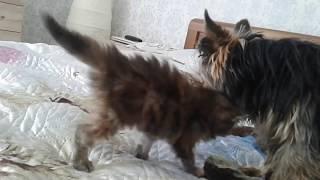 Кот чуть не съел собаку! Никто не знает что делать)