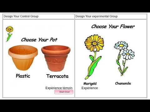 La démarche scientifique (exemple à partir des fleurs avec ou sans savon)