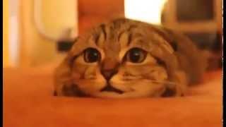 Приколы с животными. Кот смотрит фильм ужасов.