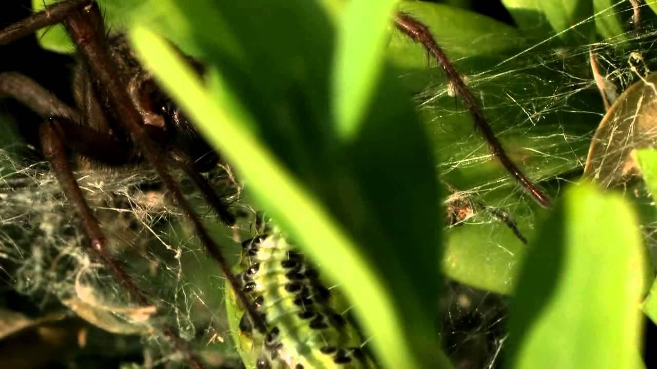 Blattl use biologisch bek mpfen biologischer rasend nger for Fliegen in blumenerde kaffeesatz