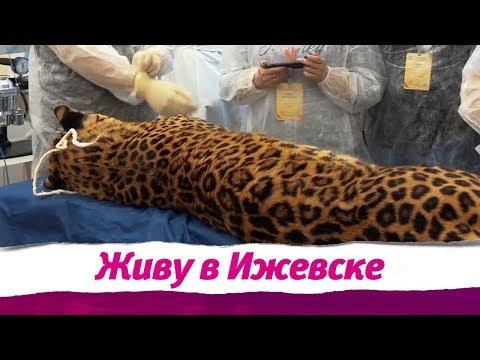 Живу в Ижевске 28.03.2019