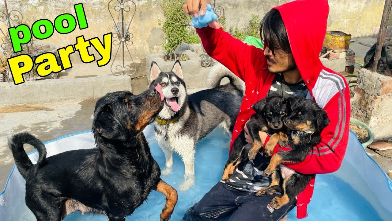 Pool party With My Dogs    Roxy the Rottweiler   Roxy Ke Bacche   Rottweiler Puppy, Review reloaded