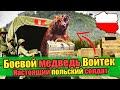 ПОЛЬСКИЙ БОЕВОЙ МЕДВЕДЬ - Wojtek The Soldier Bear - The Bear That Went To War
