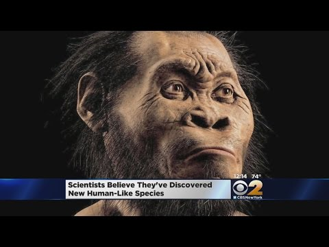 New Fossils Discovered