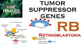 DEFECTS IN DNA REPAIR, DNA repair genes & Associated Cancers - YouTube