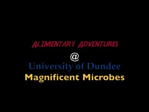 Alimentary Adventures at Magnificent Microbes