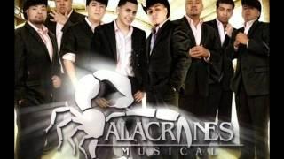 Alacranes Musical - El Caballo Bayo