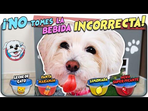 NO ELIJAS la BEBIDA INCORRECTA versión PERRO! 🥤🐶 Anima Dogs