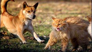 КОШКА которую выбросили с котятами в лесу отважно ЗАЩИЩАЛА своих малышей от собак