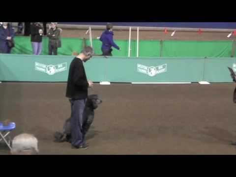 Utility Dog Obedience Competition.