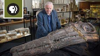 Meet a Jurassic Killer: Temnodontosaurus