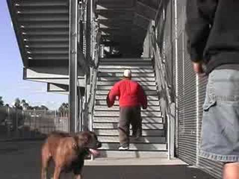 Protection and Police K9 Dog Training - Sit Means Sit