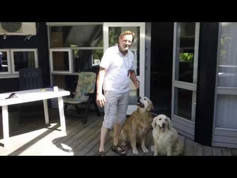 Vierbeiner in Dänemark