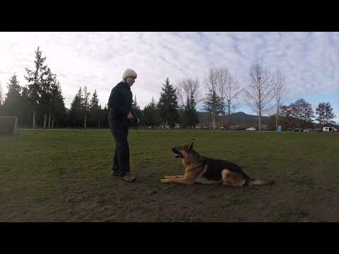 Focus and targeting work with Jagger ~ Video Sponsored by Prodogz.com