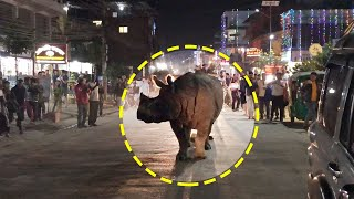 The most incredible occurrences of wild animals in the city. Animals come to visit
