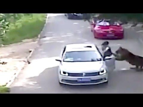 Woman Mauled to