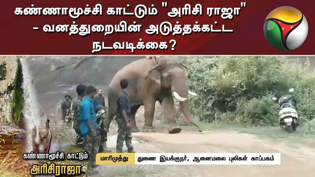 "Image result for arisi raja elephant"""