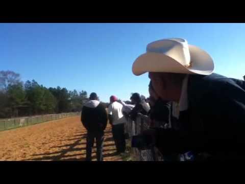 Carreras de caballos en Dalton Ga 2012