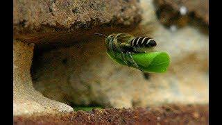 Bí ẩn loài vật mang thứ lá màu xanh về tổ bảo vệ con non