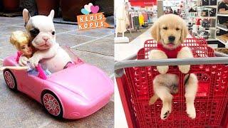Yavru Köpekler - Sevimli Dostlar - En Sevimli En Komik Köpek Videoları - Kediş Köpüş