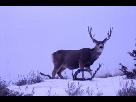 Deer Hunting 062 Nevada NNW of ELKO