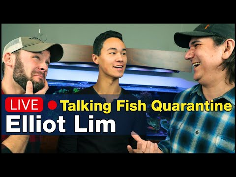 Talking Saltwater Fish Quarantine And Husbandry W/ Elliot Lim Of Marine Collectors!