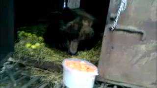 Bear Irina(, 2012-03-14T07:53:21.000Z)