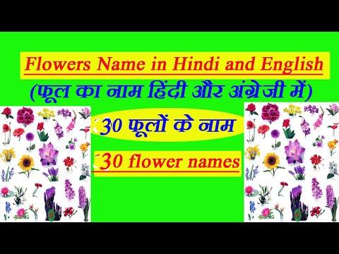 30 Flowers Name in Hindi and English | फूलों के नाम