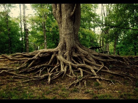 The Rhizosphere: an interaction between plant roots and soil biology