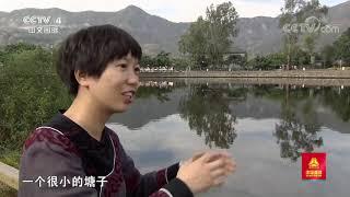 《远方的家》 20200730 行走青山绿水间 守望生态家园| CCTV中文国际 - YouTube