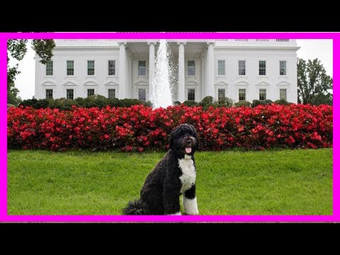 Breaking News | Trump white house accidentally uses photo of obama's dog bo to tout their tax propo