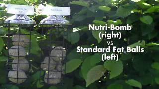 Honeyfield Nutri Bomb Comparison Premium vs Stardard Fat Ball, Birds; www.honeyfieldswildbird.co.uk