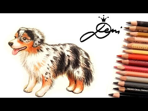 Australian Shepherd Hund zeichnen 🐶How to draw a dog🐕 как се рисува австралийска овчарка куче