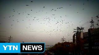 포항 지진, 규모 7 이상 대지진 전주곡? / YTN