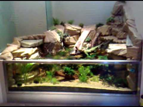 Film 2 aquarium d cor aquacascade cichlides africain - Faire un mur de photos decoration ...