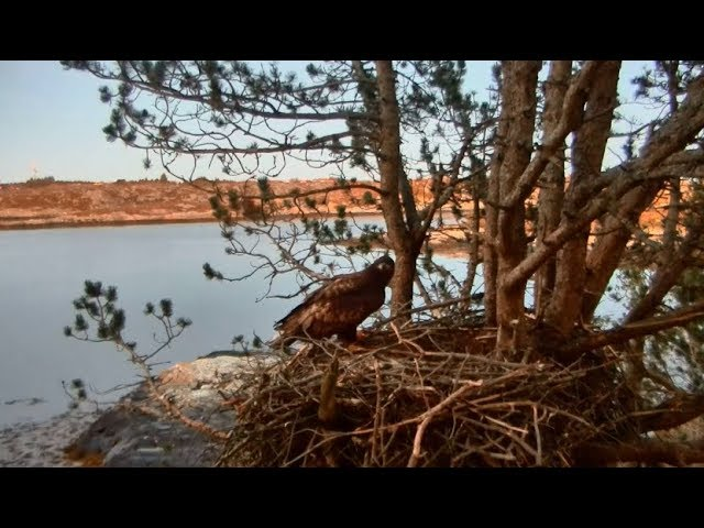 smola-norway-eagle-nest-solo-baroness-arrive-for-the-evening-1-20-18